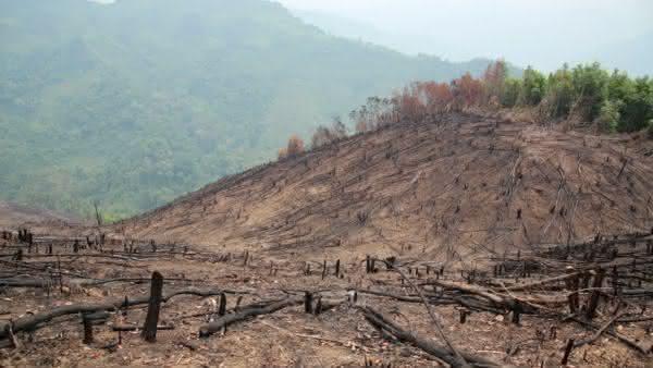 Laos entre os paises com maior taxa de desmatamento