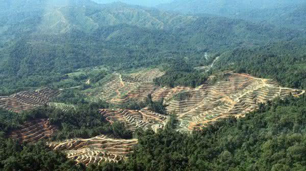 Malasia entre os paises com maior taxa de desmatamento