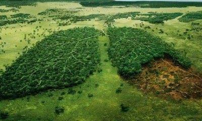 nicaragua entre os paises com maior taxa de desmatamento