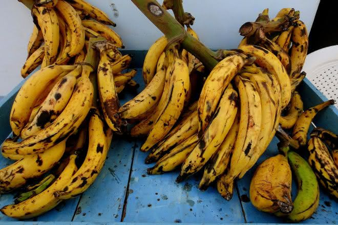 banana da terra entre as frutas mais populares do mundo