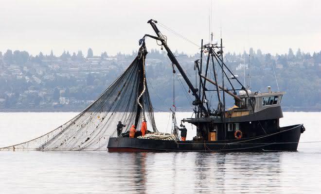 pesca ilegal entre os crimes mais rentaveis do mundo