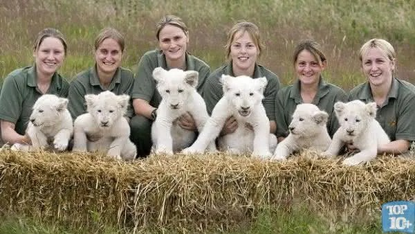 Top 10 animais de estimação mais caros do mundo 1