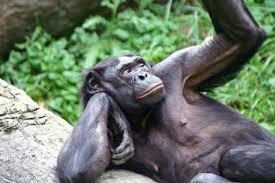 Bonobo Animales Descubiertos Recientemente