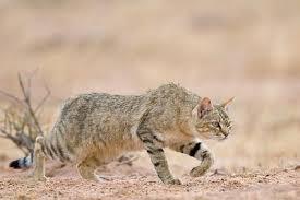 5 Datos curiosos sobre los gatos
