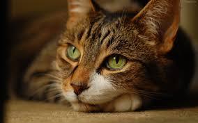 7 Datos curiosos sobre los gatos