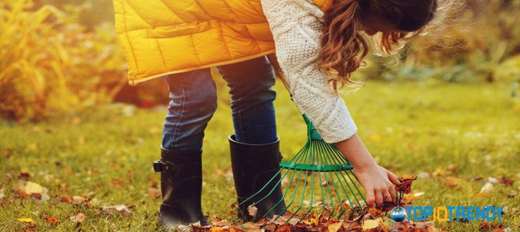 Clean the garden from dead leaves