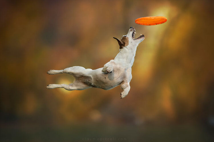 Photographer Captures Dogs In Mid-Air Jumping To Catch