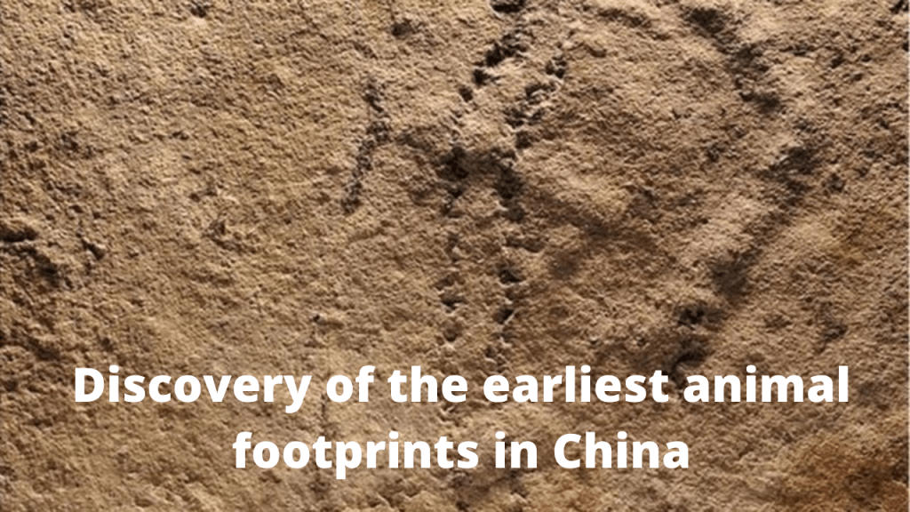 Discovery of the earliest animal footprints in China
