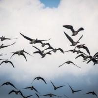 5-те най-бързи птици в света