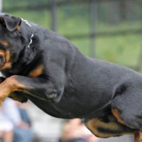 5-те най-опасни породи кучета