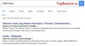 google search algo