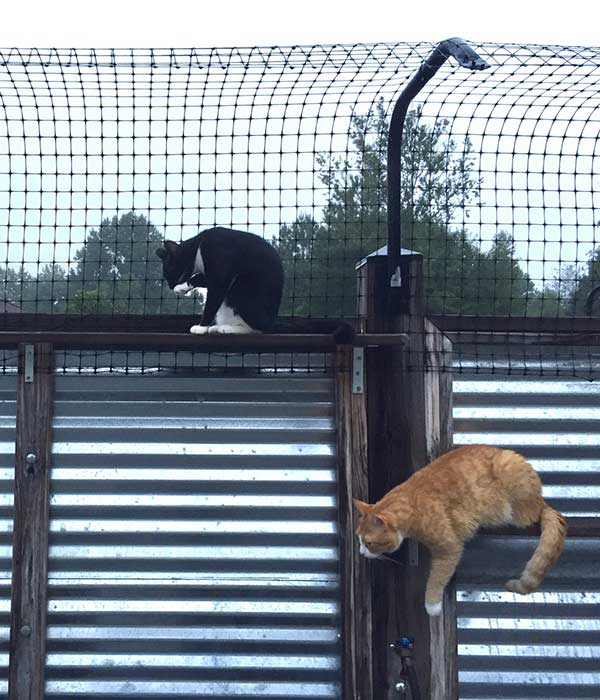 a cat fence made from an existing fence