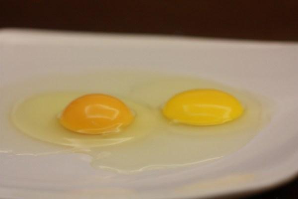 معلومات البيض تحتاجي تعرفي البيض Eggs