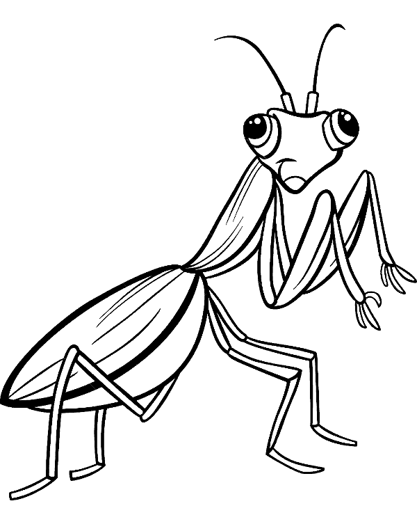 Insect coloring pages 15 to print and color for free
