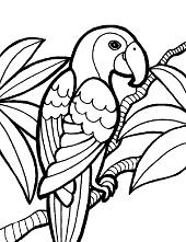 Parrot in bush