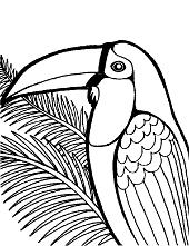 Tucan wildlife
