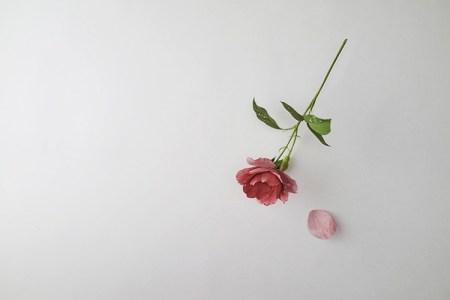 Rose-Suda