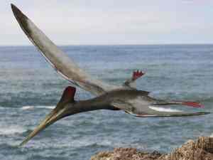 Como Eran Los Dinosaurios Voladores O Pterosaurios Hace Anos Aunque el pterosaurios es considerado un dinosaurio, en realidad eran reptiles voladores y no dinosaurios. como eran los dinosaurios voladores o