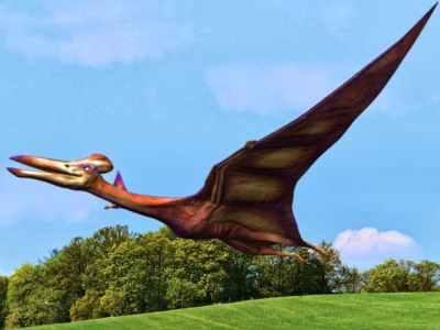 Como Eran Los Dinosaurios Voladores O Pterosaurios Hace Anos ¿por qué se le llama dinosaurios a los dinosaurios? como eran los dinosaurios voladores o