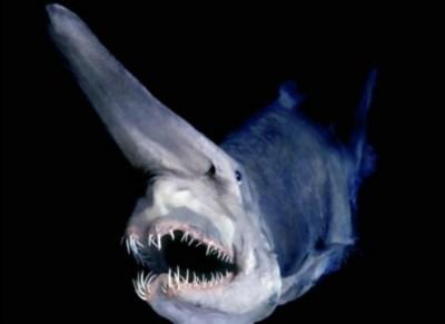 3) Žralok Owstonov nebezpečenstvo v oceáne