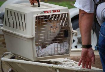 3 Adopciou zachranité život Prečo mať mačku