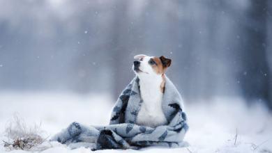 7 spôsobov, ako pripraviť domáce zvieratá na zimu