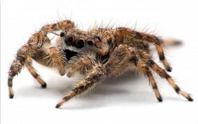 2. Tarantula
