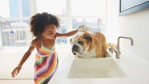 čo by ste mali vedieť o kúpaní vášho psa Ako okúpať psa
