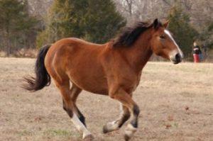 9. Mustang