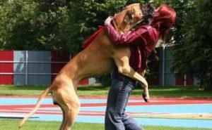 9. Skakanie Zle správanie psa