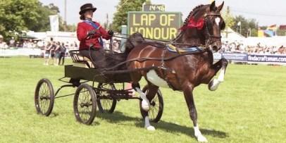 3.Hackney (Hackney horse) Najlepšie kone 10 najlepších plemien koní na svete . Najlepšie plemená koní na svete . Najlepšie kone zoznam plemien . Najlepšie plemena koní