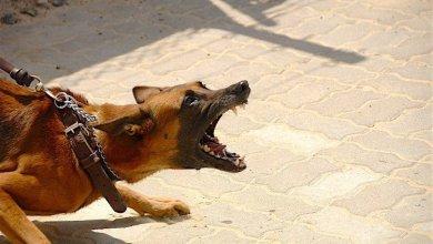 agresivne psy