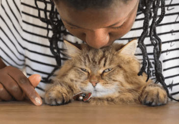 bozkavanie mačky