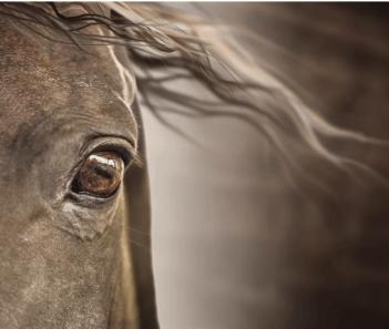 Ich Oči Fakty o koňoch Fakty o koňoch