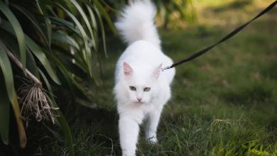 Chovať mačku vonku alebo na byte ?
