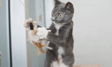Zvyšujte aktivitu interiéru Mačku vonku alebo byte