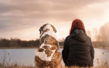 vycvik psa Psy lepšie ako mačky
