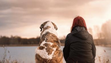 vycvik psa
