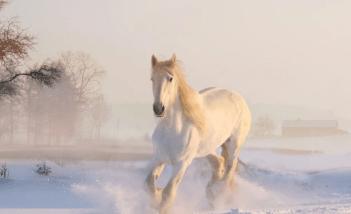 Zazimovanie koňa Kompletná starostlivosť o kone počas zimných mesiacov