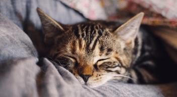 spiaca macicka Zdravotné problémy mačky
