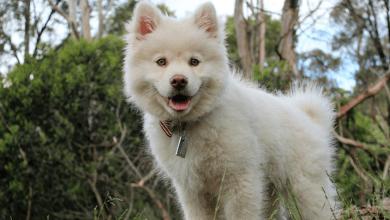 prečo je pes najlepši priatel človeka
