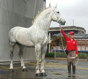 3. Percheron najväčších plemien koní na svete najväčší