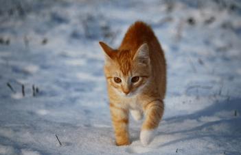 omrznute labky Nebezpečenstvo pre mačku v zime
