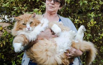 4. Nórska lesná mačka Najväčšie mačky na svete . Pozrite si 10 najväčších plemien mačiek na svete . Tieto mačky sú skutočnš Najväčšie mačky  . Najväčšia mačka
