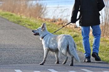 Záchvat Choroby ktoré môžu psy vyňuchať - 6 chorôb . Aké choroby môže pes vycítiť ? Choroby ktoré môžu psy vyňuchať 6 chorôb ktoré pes vycíti  a odhalí.