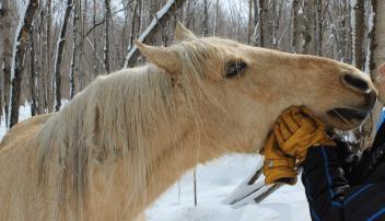 radosť z kona