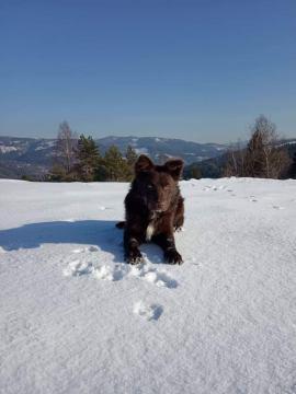 pes na snehu