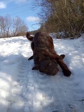 radosť zo snehu starostlivosť o psa