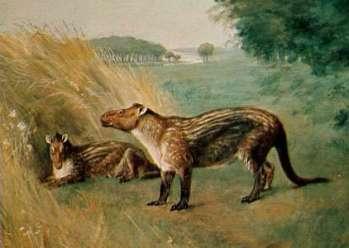 Epihippus Prehistorické kone praveke kone