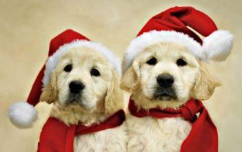 3. Zlatá zima Top 10 vianočných filmov o psoch
